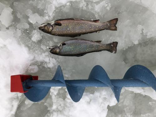 Pêche Driscoll